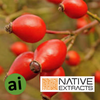 Rosehip Fruit Extract - Aromatic Ingredients