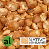 Shiitake Mushroom Extract - Aromatic Ingredients