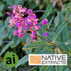 Willow Herb Extract - Aromatic Ingredients
