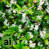 Jasmine Fragrance - Aromatic Ingredients