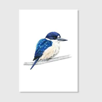 Forest Kingfisher Art Print