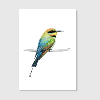 Rainbow Bee Eater Art print