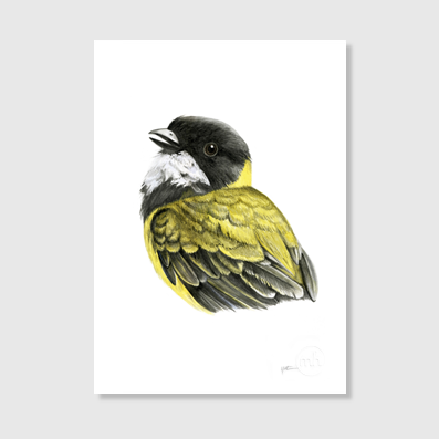 Golden Whistler Art Print