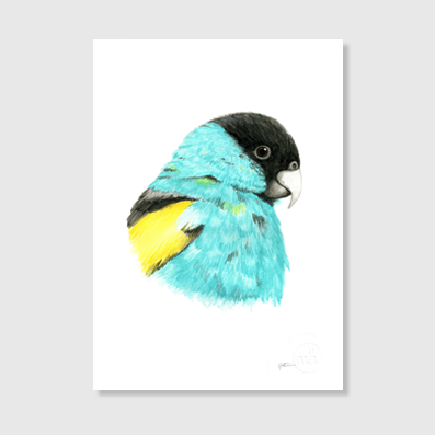 Hooded Parrot Art Print