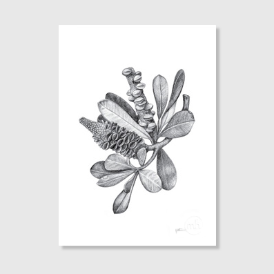 Banksia Bunch Art Print
