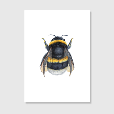 Northern Bumble Bee Art Print