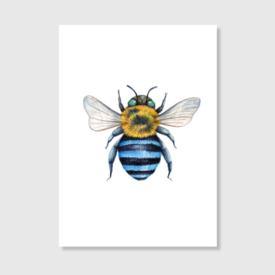 Blue Banded Bee Art Print