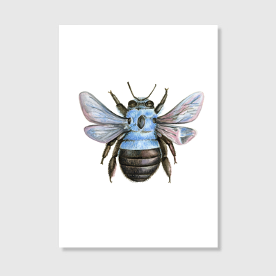Blue Carpenter Bee Art Print