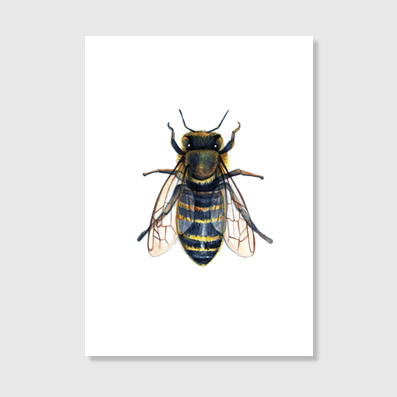 European Honey Bee Art Print