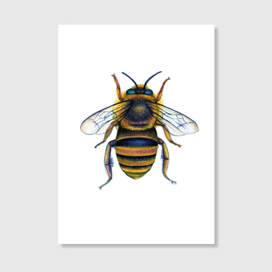 Teddy Bear Bee Art print