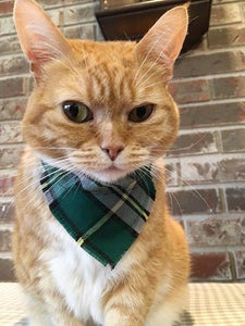 Celtic Cat Tartan Collar Scarf