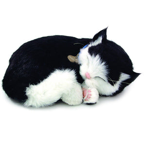PERFECT PETZZZ - BLACK AND WHITE SHORTHAIR CAT
