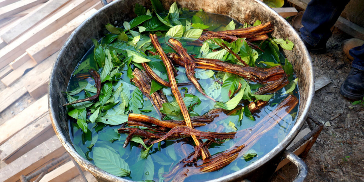 ayahuasca ingredients