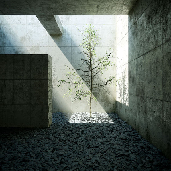 The Modern Architecture of Tadao Ando