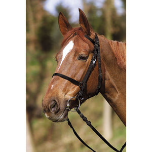 Excelsior Bridle/Headcollar