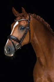 Stanford Bridle