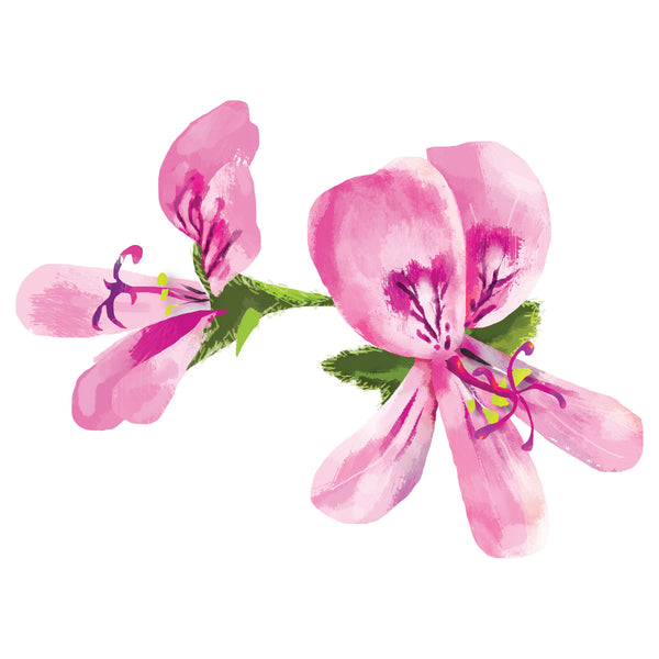 Rose Geranium Body Tonic Oil 玫瑰天竺葵健身護理油 (dry & ezcema skins)