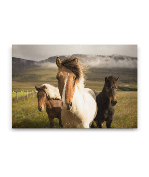 Fan of Horses Canvas