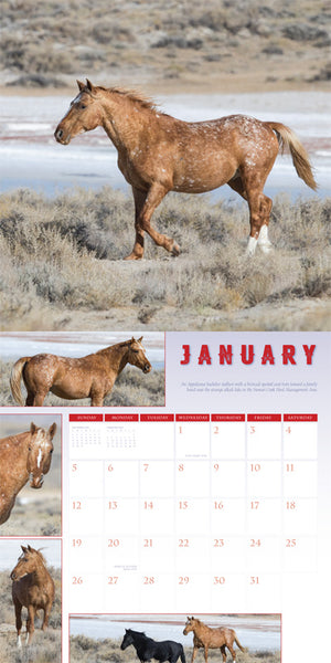 Support the Wild Horse Freedom Federation Calendar 2020