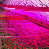 LED grow light full spectrum diamond ii 800w double chips red/blue/white/uv/ir 410-730nm for indoor plants flower phrase