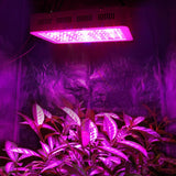 LED grow lights 300w full spectrum plant lamps for indoor greenhouse hydroponic systems tent garden