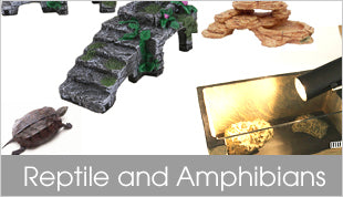 Reptile and Amphibians