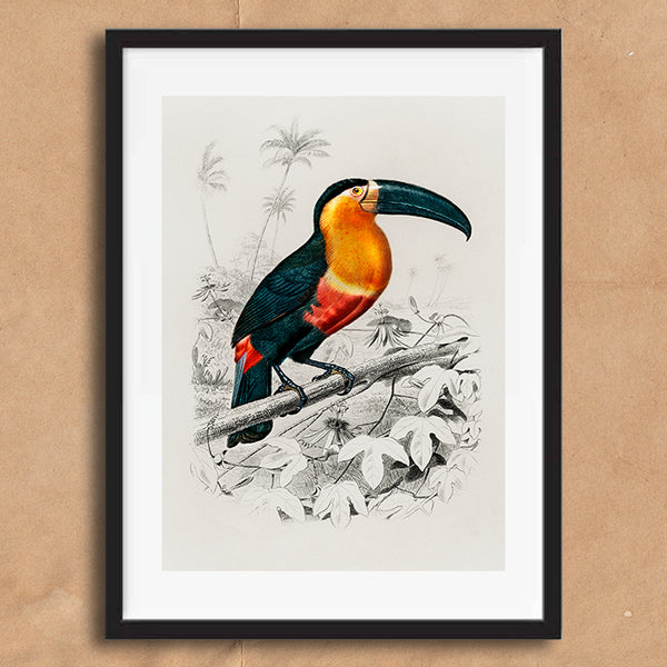 Toucan Vintage Twist Illustration wall art print unframed and framed