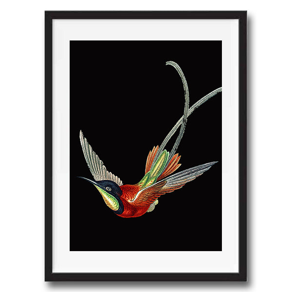 Humming Bird Vintage Twist Illustration bold bright art print various colours framed and unframed