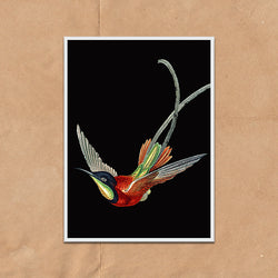 Humming Bird Vintage Twist Illustration bold wall art print framed and unframed