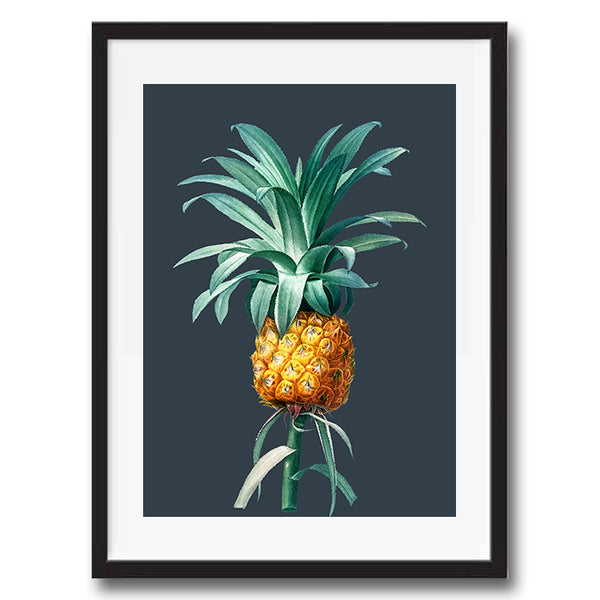 Vintage Twist Pineapple Botanical Illustration art print various colours framed and unframed