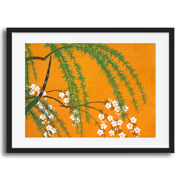 Vintage Japanese Floral Blossom illustration art print various sizes unframed and framed