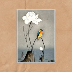 Kingfisher Lotus flower retro vintage Japanese wall art print framed and unframed