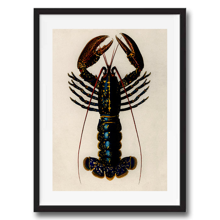 Lobster illustration retro vintage animal wall art print framed and unframed