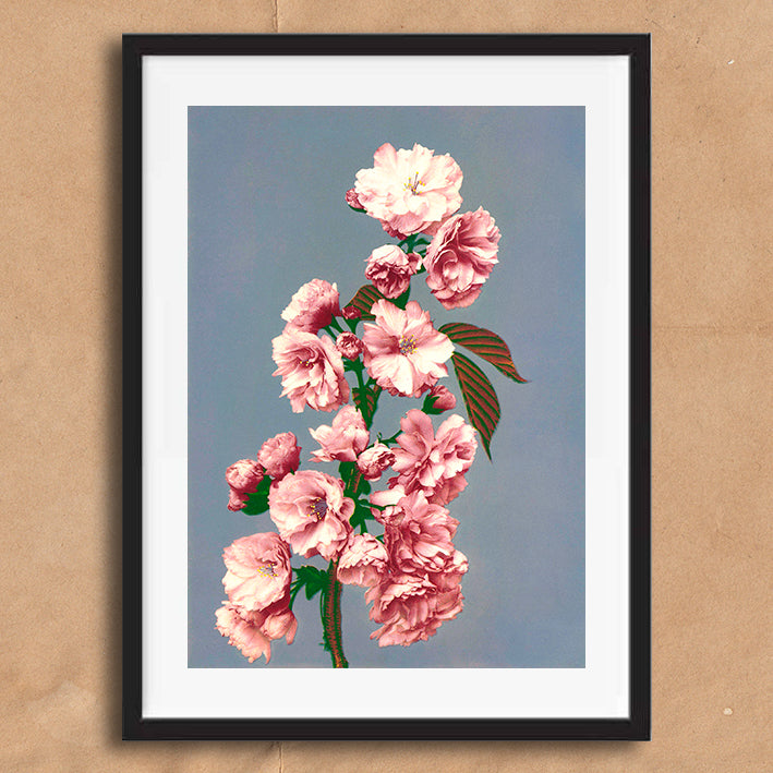 Pink vintage floral photography art print unframed and framed