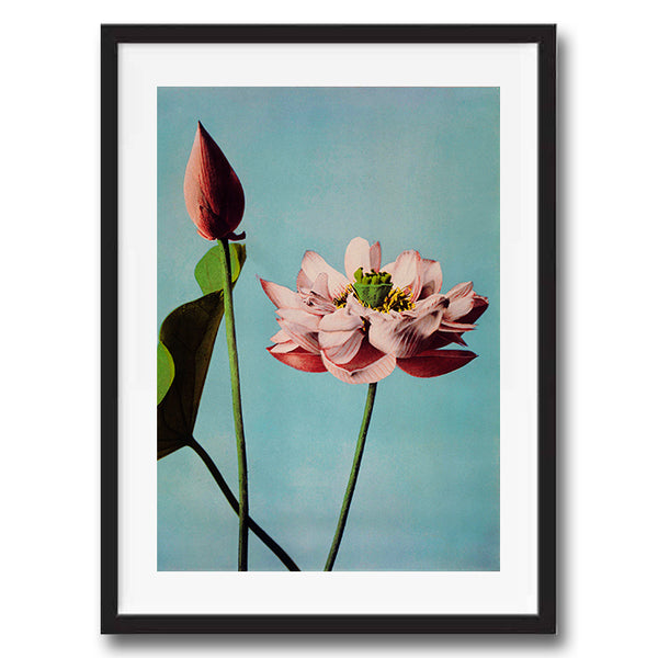 Pink Flower on blue vintage floral photography art print unframed and framed