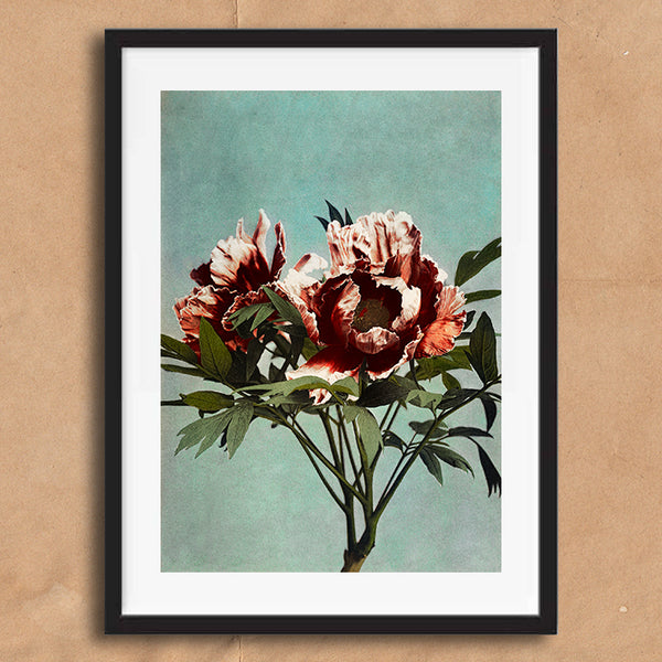 Pink Flower blue backdrop vintage floral photography art print unframed and framed