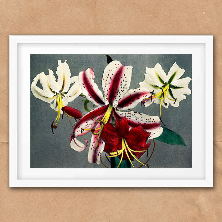 Red Pink Lily Flower vintage floral photography art print unframed and framed