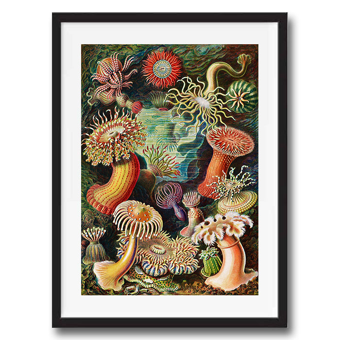 Sea Flowers painting retro vintage curiosity wall art print framed and unframed