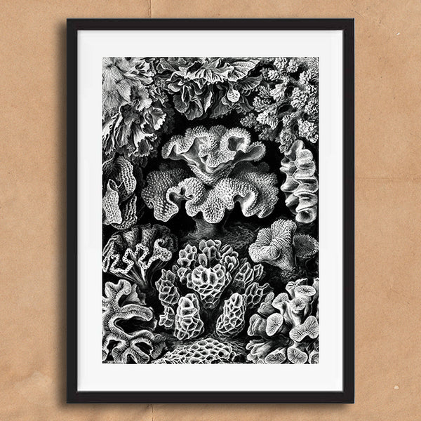 Coral Black and White painting retro vintage curiosity wall art print framed and unframed