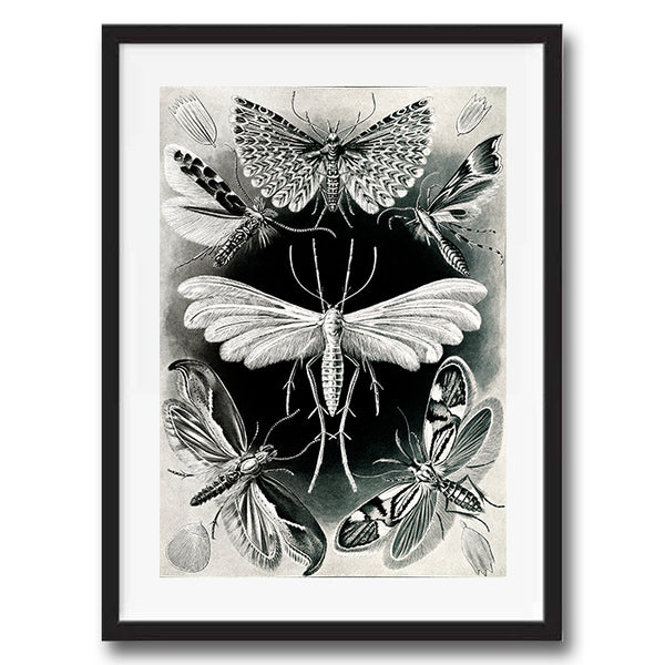 Moths Black and White illustration retro vintage curiosity wall art print framed and unframed