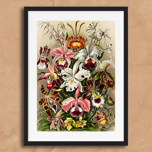 Colourful Orchids illustration retro vintage curiosity wall art print framed and unframed