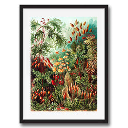 Ferns and Moss illustration retro vintage curiosity wall art print framed and unframed