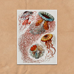 Colourful Jelly Fish illustration retro vintage curiosity wall art print framed and unframed