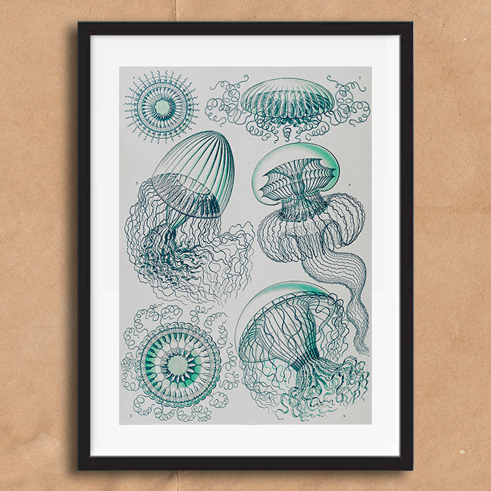 Jelly Fish in blue illustration retro vintage curiosity wall art print framed and unframed