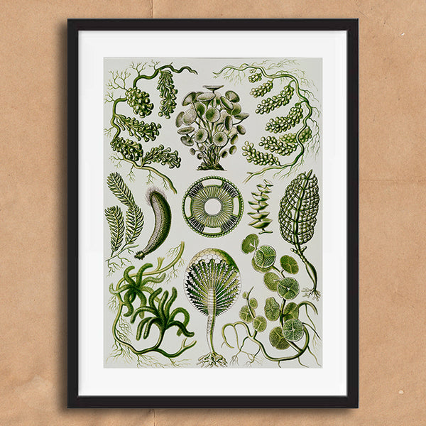 Sea Coral Floral Green illustration retro vintage curiosity wall art print framed and unframed