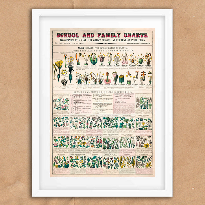 Botany Vintage School Chart illustration retro vintage curiosity wall art print framed and unframed