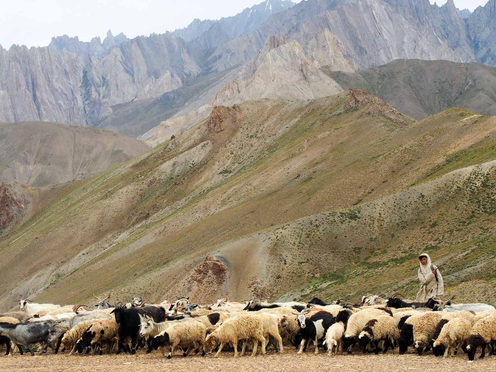 Trekking in Ladakh from Gyal to Kanji, goats on the Sarbantan La