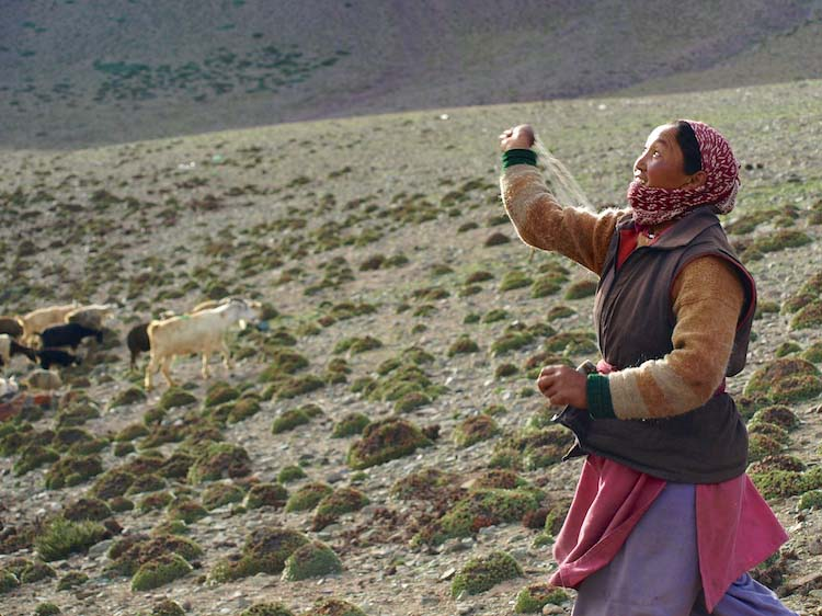 shepherd woman with slingshot