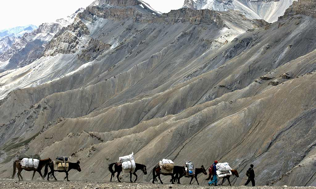 Ponies on the Zarlung Karpo La, Ladakh
