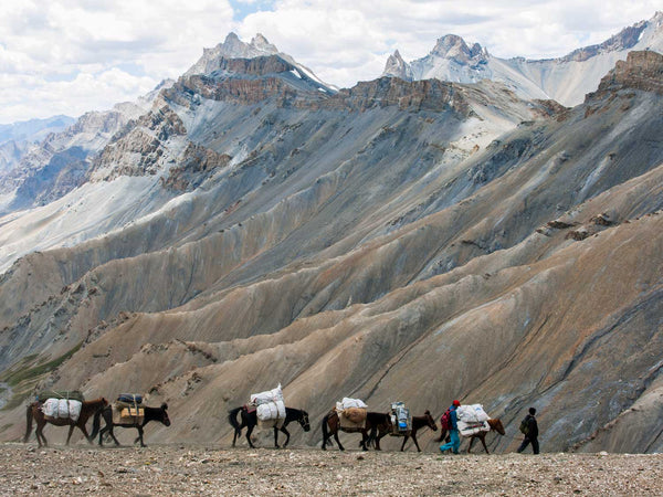 Ponies Descending from the Zarlung Karpo La, Ladakh 1